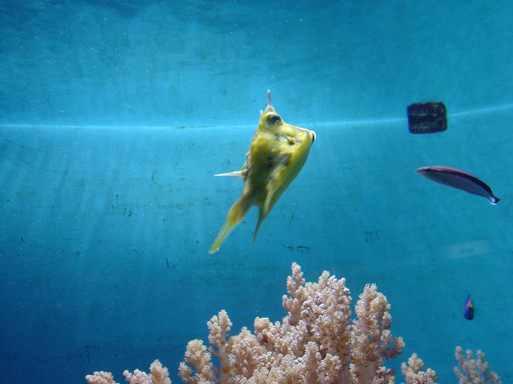 Lustiger fisch foto bild tiere zoo wildpark for Fisch bilder