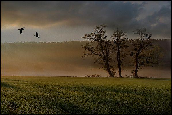 Luxemburger Feld