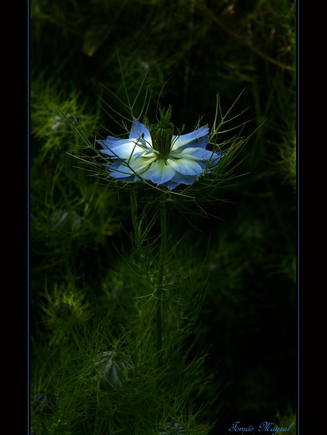 Luz Azul