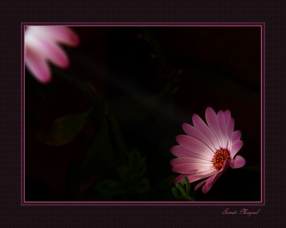 Luz Compartida