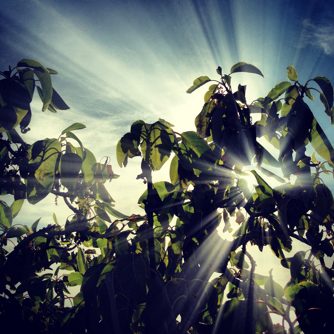 Luz entre la naturaleza