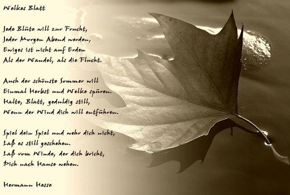 Lyrik im Bild IV