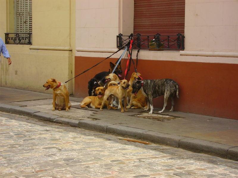 ma dove è finito il nostro dog sitter????