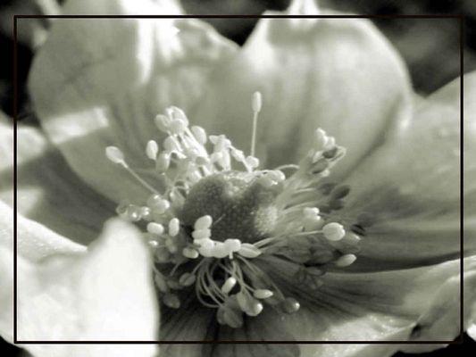 Ma fleur