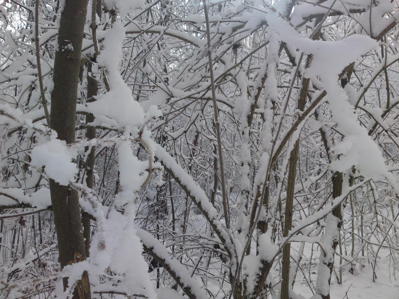 Ma forêt en hiver