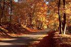 Ma forêt pour vous