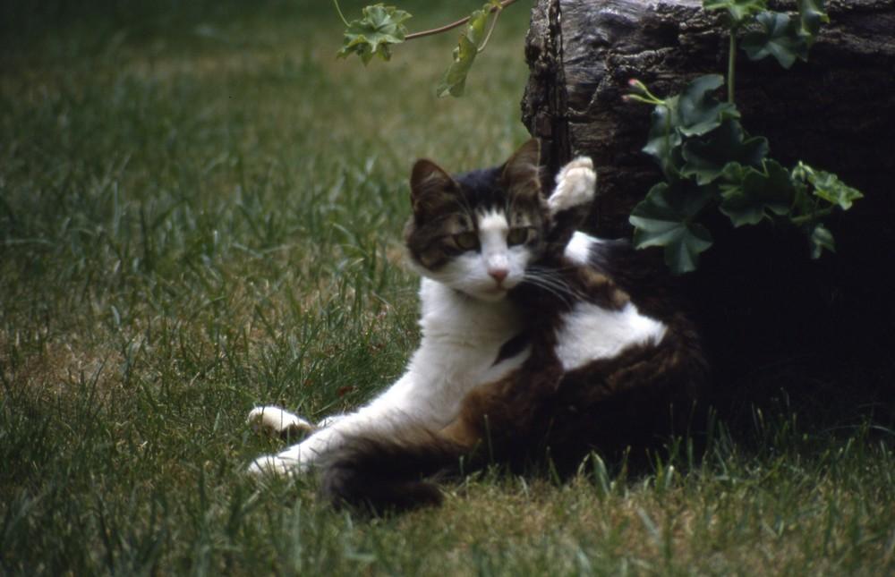 ma petite chatte grecque