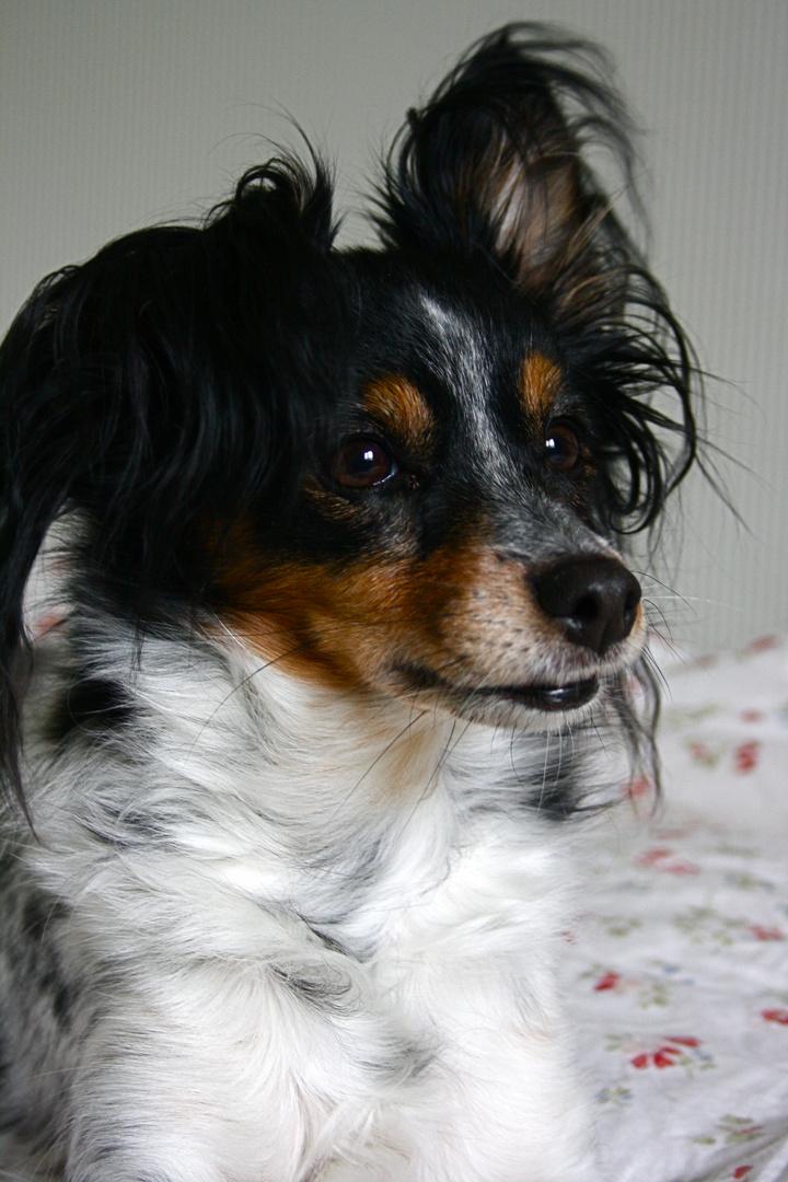 Ma petite Doggy