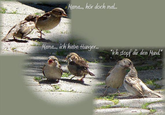 ...Maaaaama...!!!