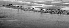 Maaskühe - Kühe als Linie zwischen Wasser und Land