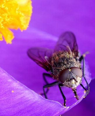 Mac Fly