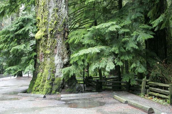 Mac Millan Park Vancouver Island