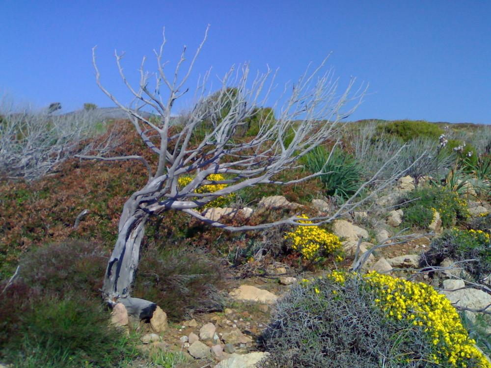 Macchia Mediterranea in Sardegna
