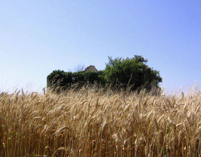 Maceria che galleggia su mare di grano