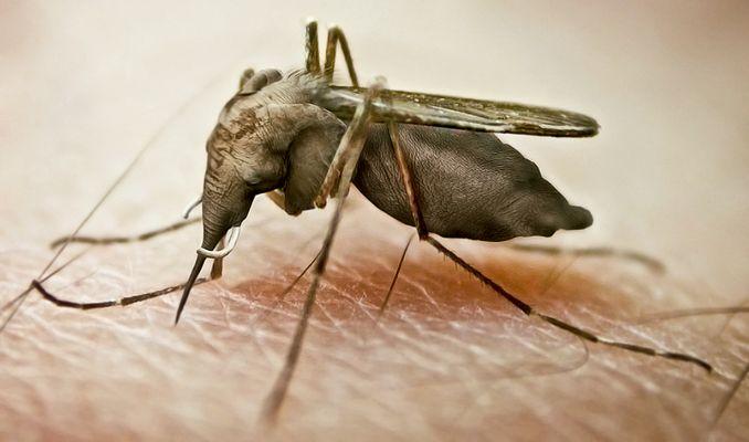 Mach' nicht gleich aus einer Mücke 'nen Elefanten!