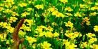 Macro Aufnahme eines Blumenbeetes