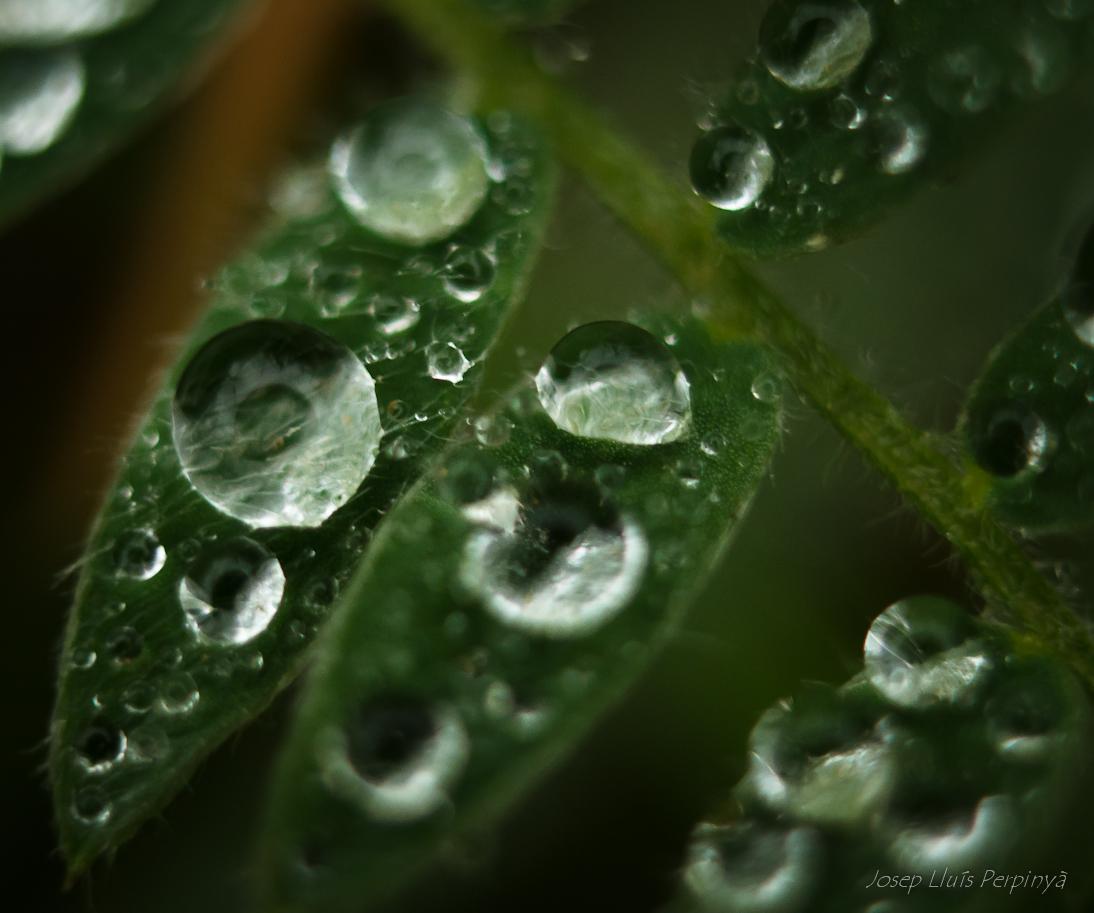 Macro despues de lluvia