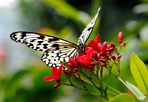 Macro d'un beau papillon