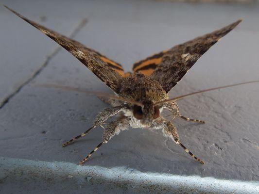 Macro d'un papillon