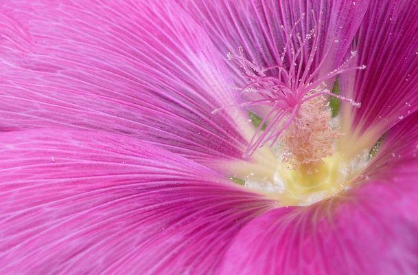 Macro Fleur (1)