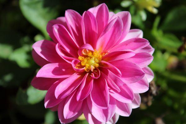 macro fleur²