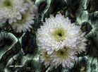 Macro-Flora