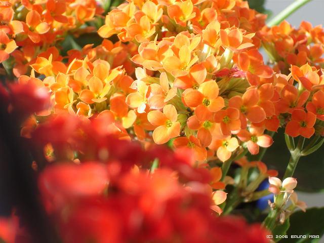 Macro Hot Flowers 2