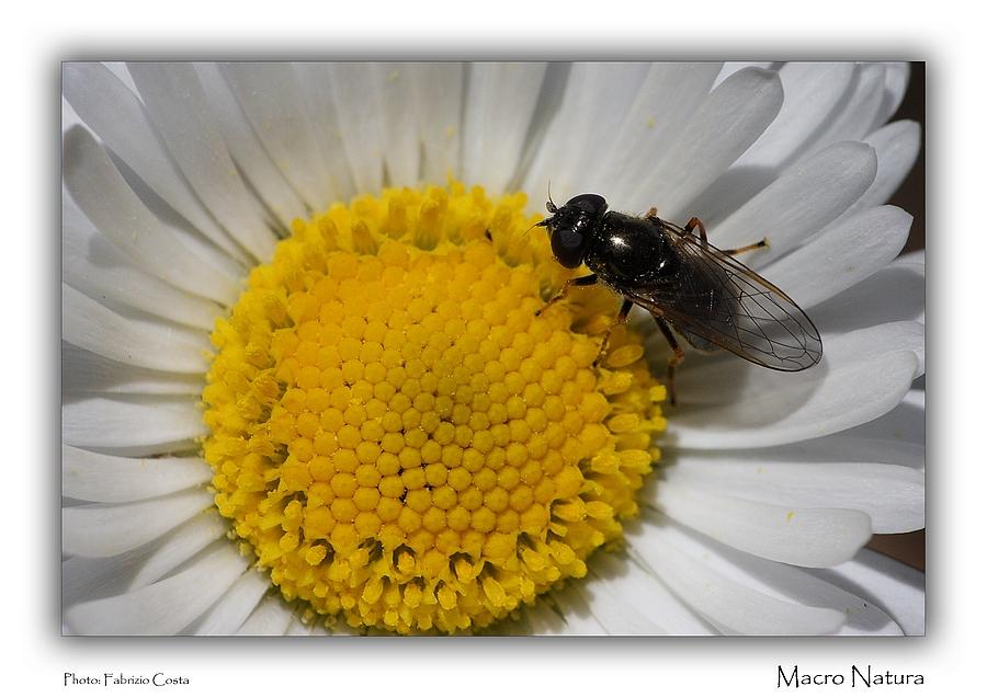 Macro Natura