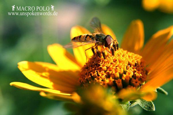 macro polo... ein Zeuge der Natur.
