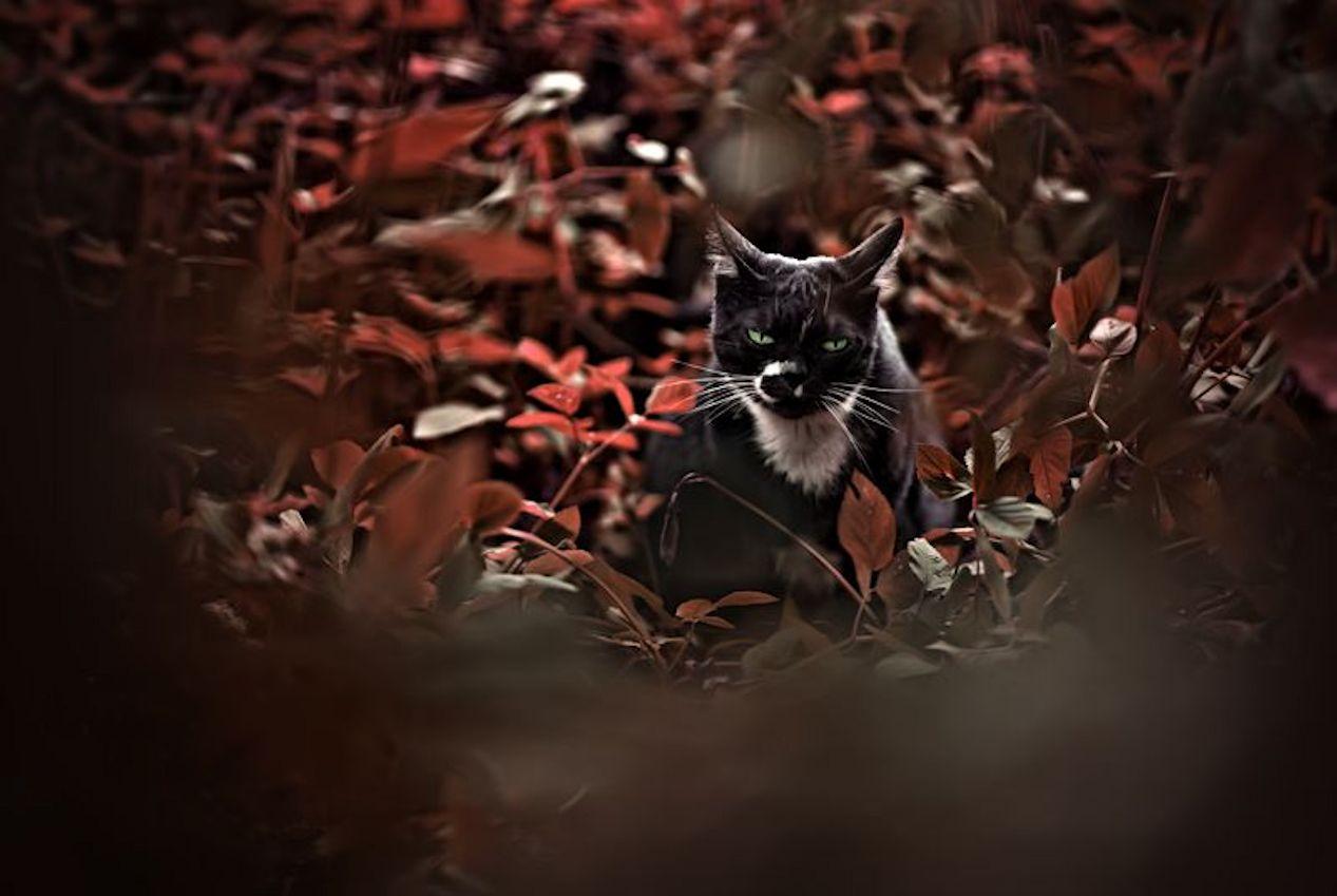 Mad Cat!