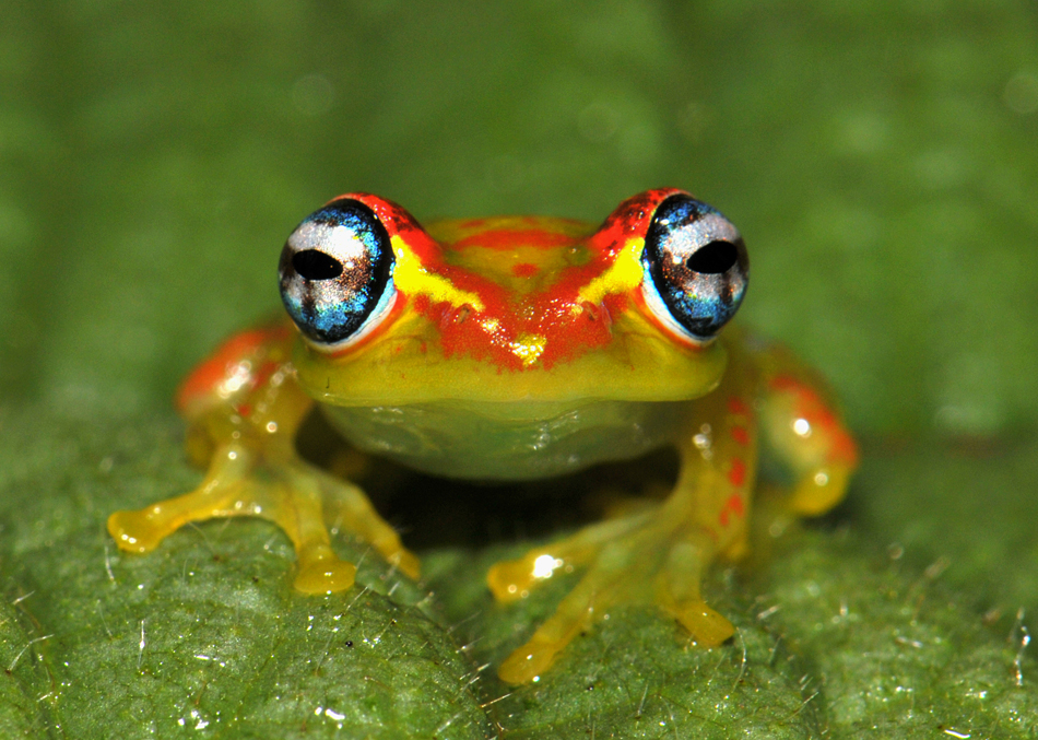madagaskar frosch foto bild tiere wildlife amphibien. Black Bedroom Furniture Sets. Home Design Ideas