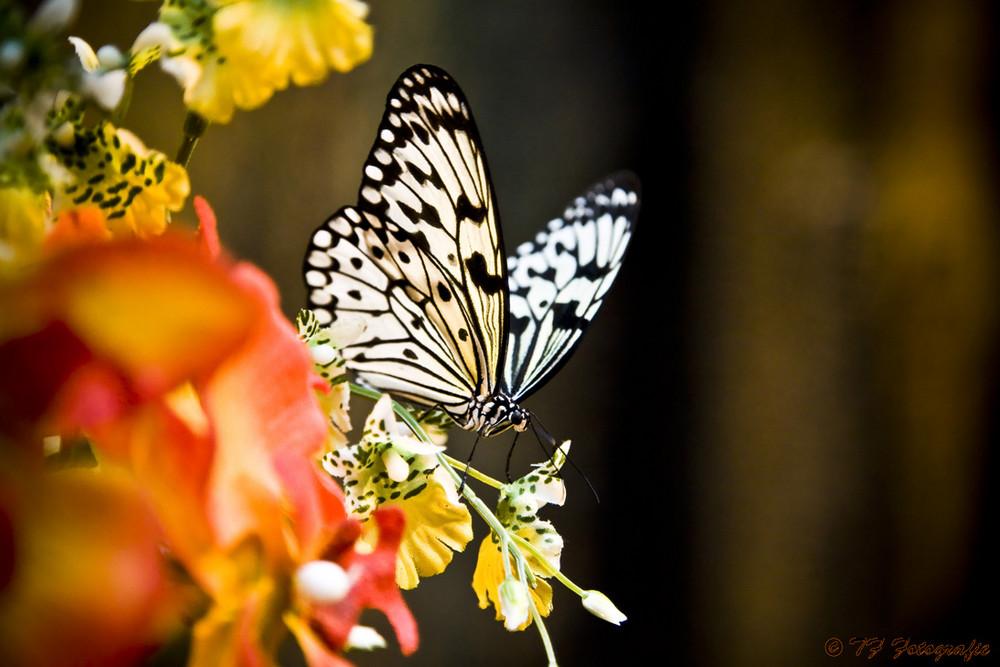 Madame Butterfly - Das Schmetterlingshaus in Wien