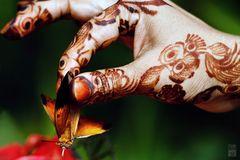 Madame Butterfly ~ Mehndi Mehendi