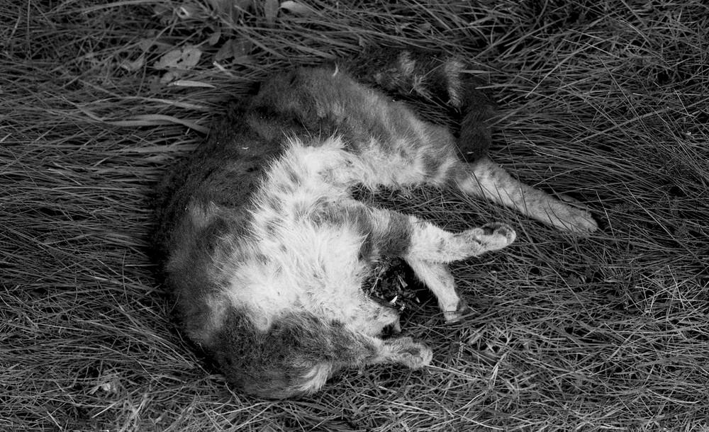 madame, le petit chat est mort