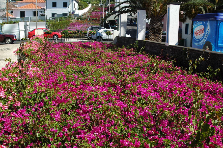 Madeira 2008 Nr.5