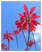 Madeira - hier versteckt sich der Frühling
