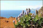 Madeira ist total ausgetrocknet, seit April 2011 kein Regen....