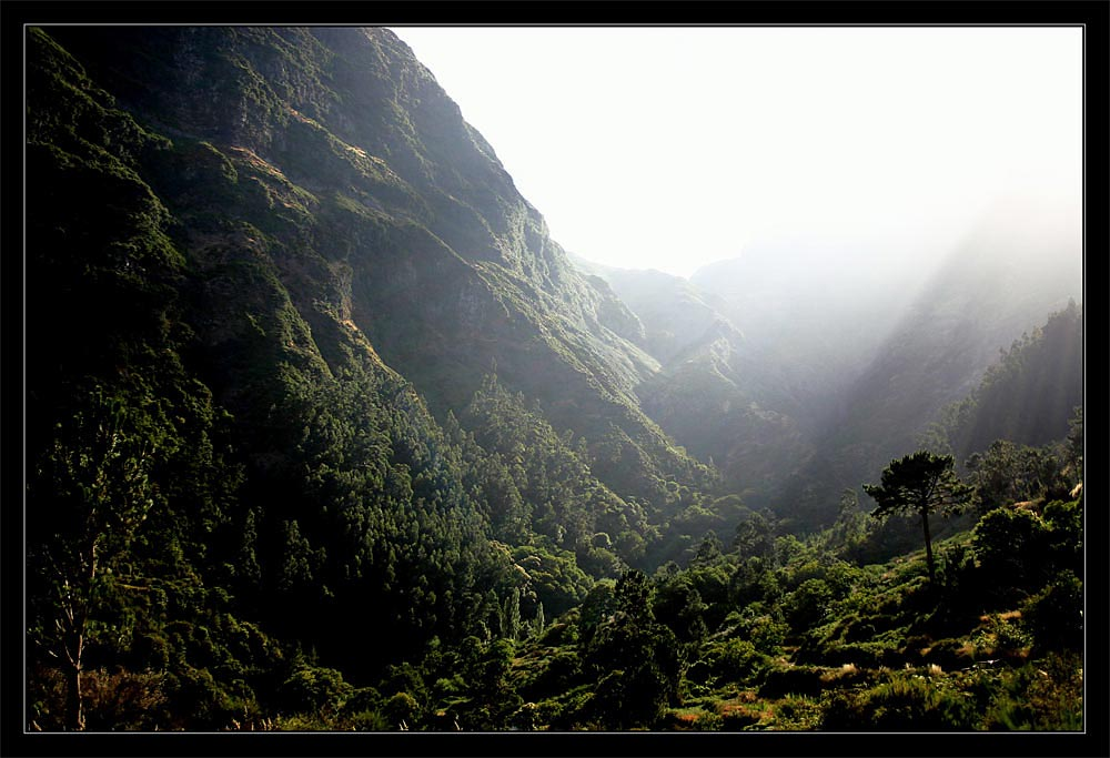 Madeira (Levada do Furado)