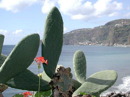 Madeira View