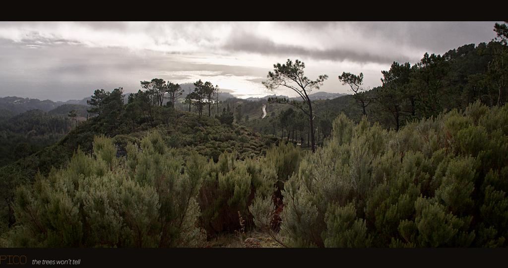 Madeira Visions_9