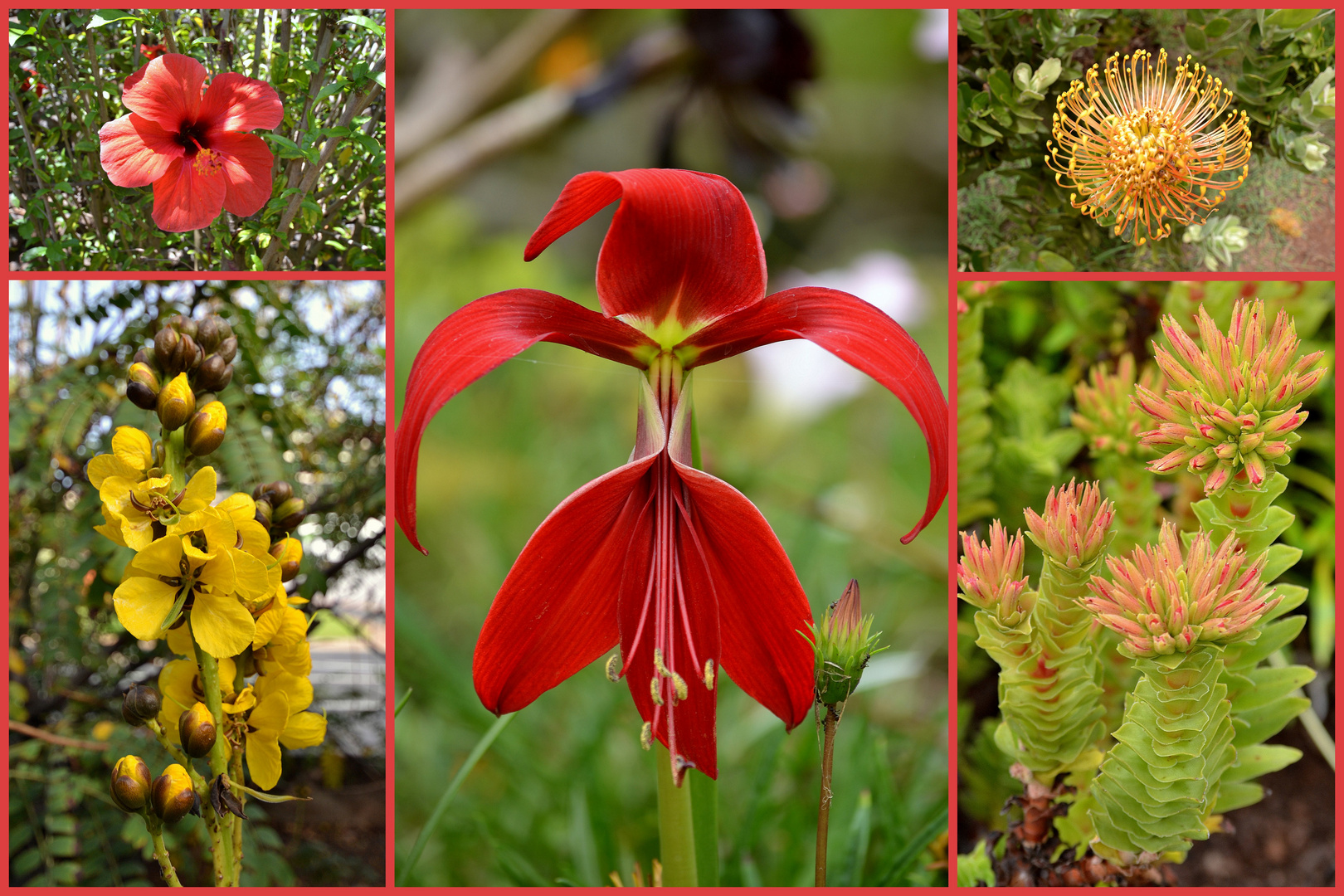 Madeira's Blütenpracht
