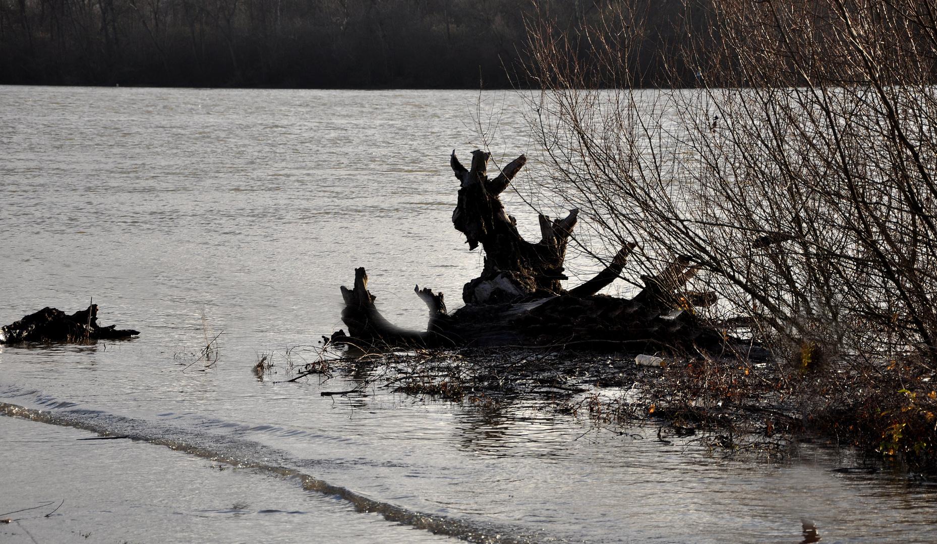 Määäääh, Geißbock versucht dem Wasser zu entkommen....