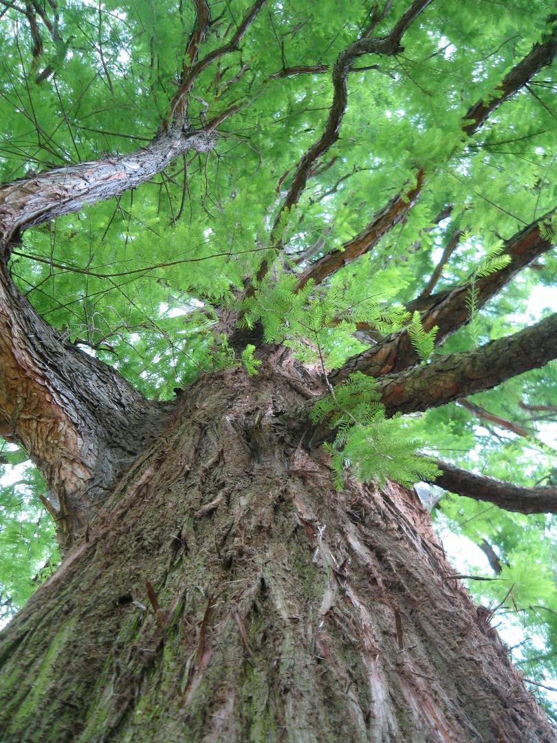 mächtiger Baum