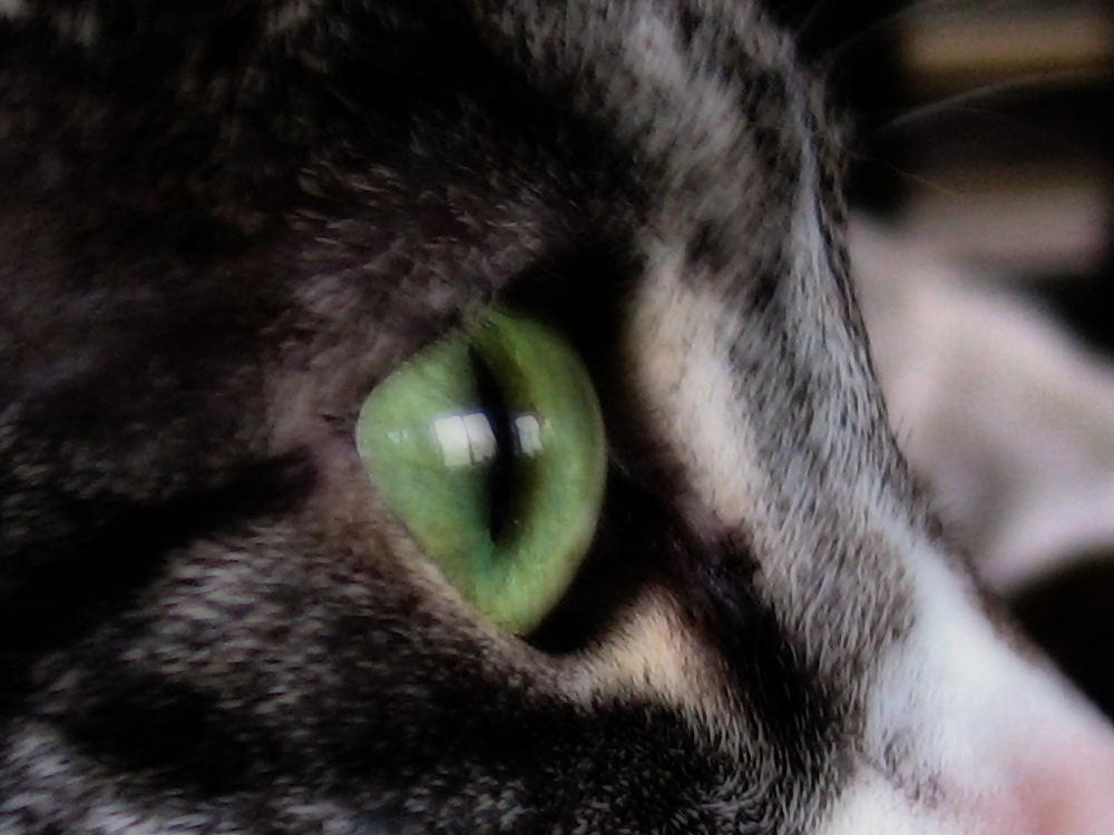 Mädi's Auge