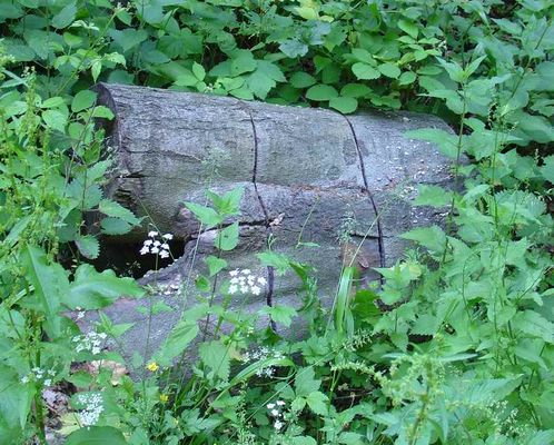 """Männertorso"" im Wald"