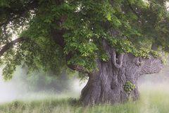 Märchenbaum ...