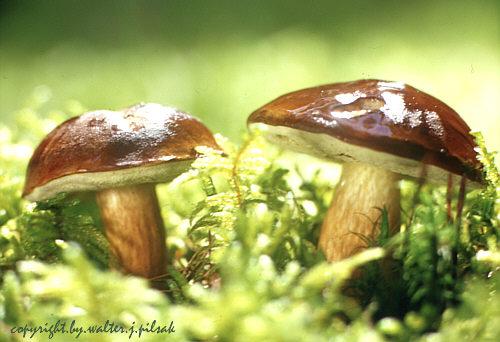 Märchengestalten des Waldes