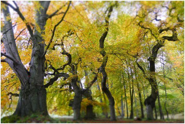 Märchenwald (1)