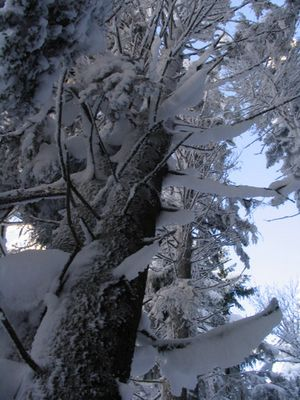Märchenwald 2