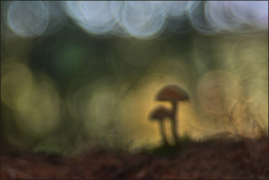 ~ Märchenwald ~